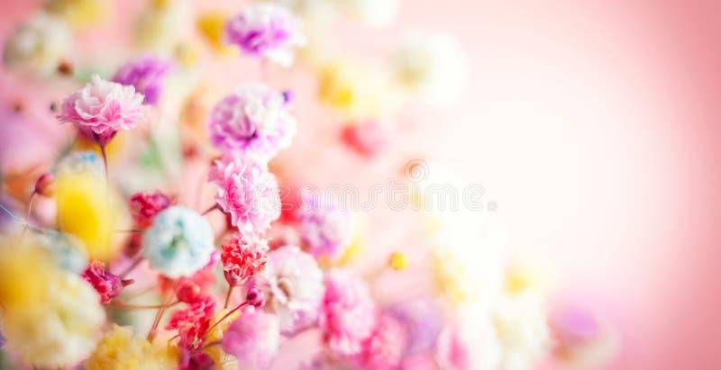 背景花卉春天夏天 开花的五颜六色的小花 免版税库存照片
