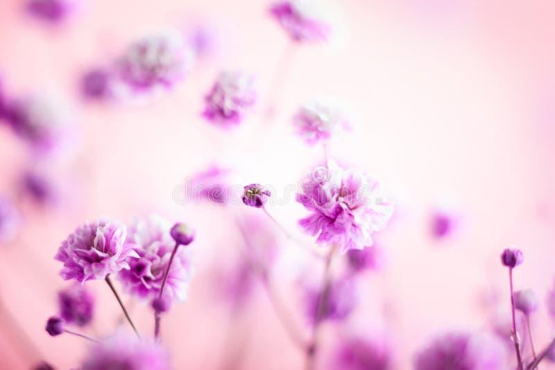 背景花卉春天夏天 开花的淡紫色小花 库存图片