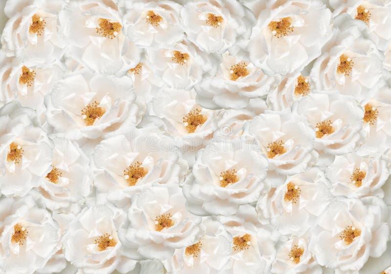 背景花卉花上升了 免版税库存照片