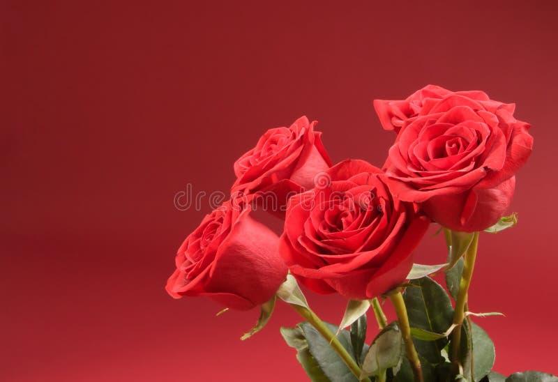 背景花束五红色玫瑰 库存照片