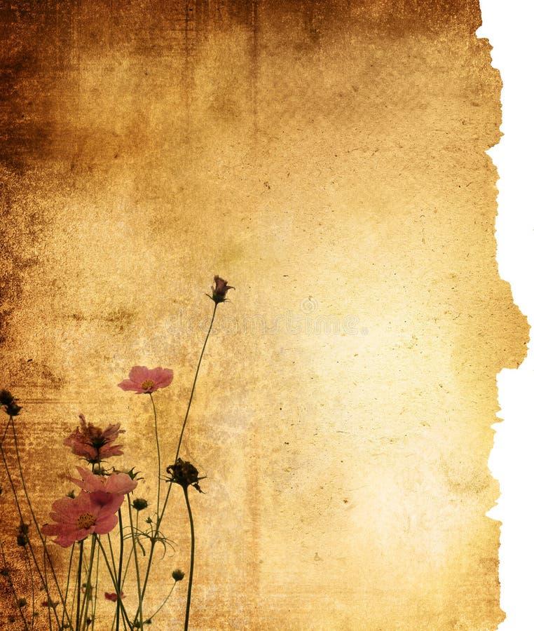 背景花纸张葡萄酒 库存图片