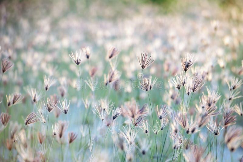背景草甸,在一个有薄雾的草甸的背景日落在夏天晚上 免版税库存照片