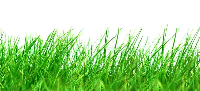 背景草绿色白色 库存图片