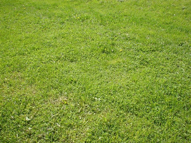 背景草绿色 库存照片