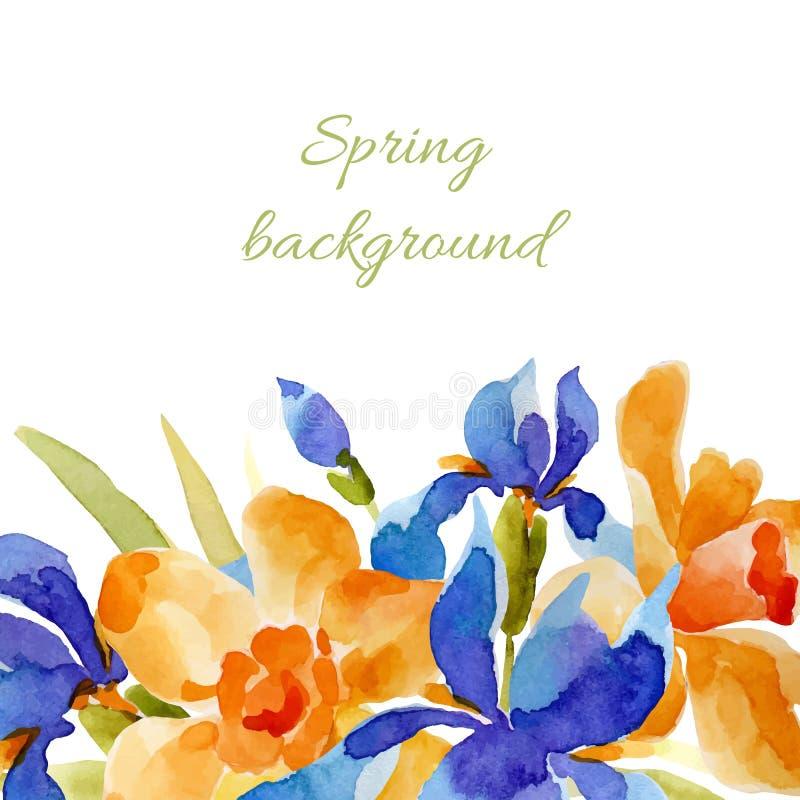 背景蒲公英充分的草甸春天黄色 水彩降下 向量例证
