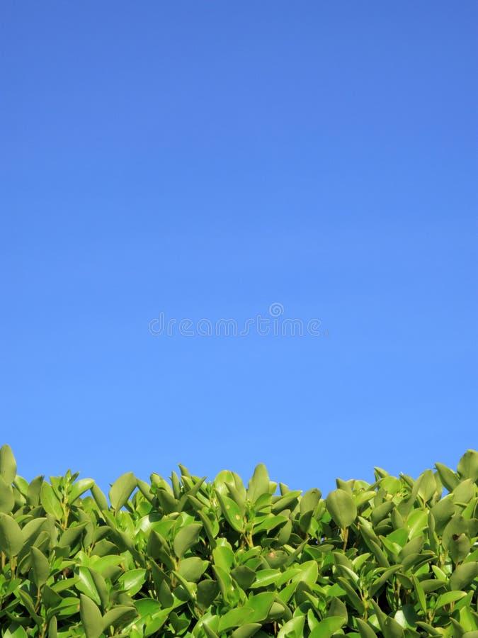 背景蓝色套期交易privet天空 库存图片