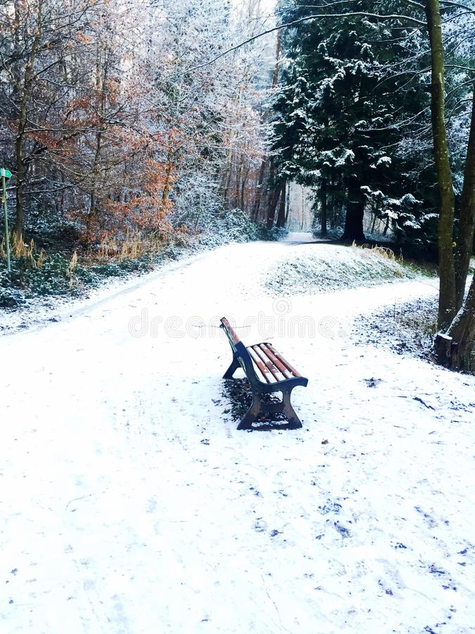 背景蓝色梦想frostwork天鹅冬天 库存图片