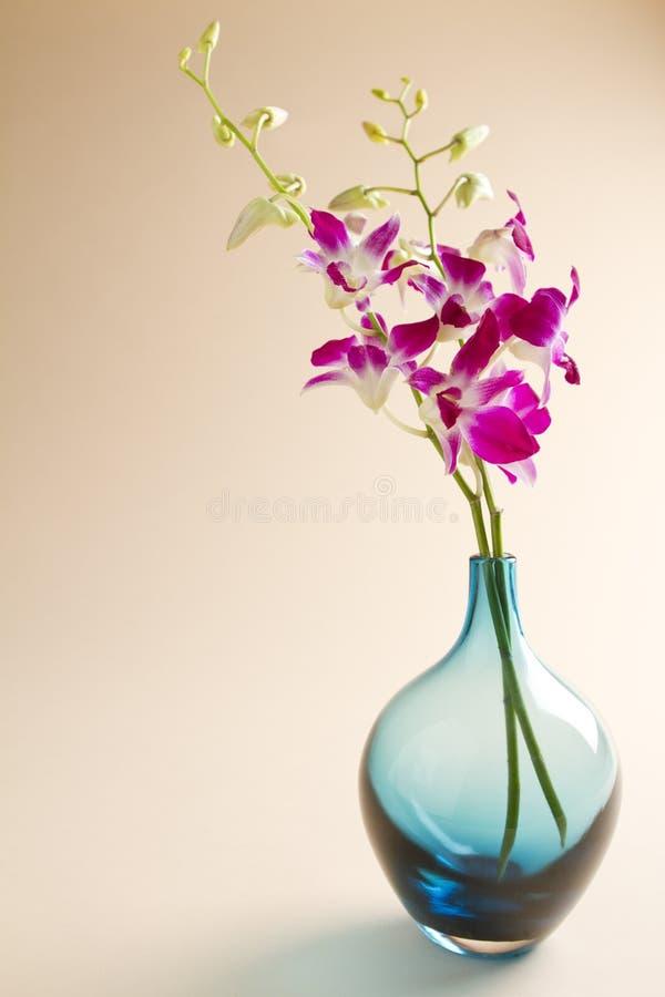 背景蓝色的兰花花瓶 库存照片