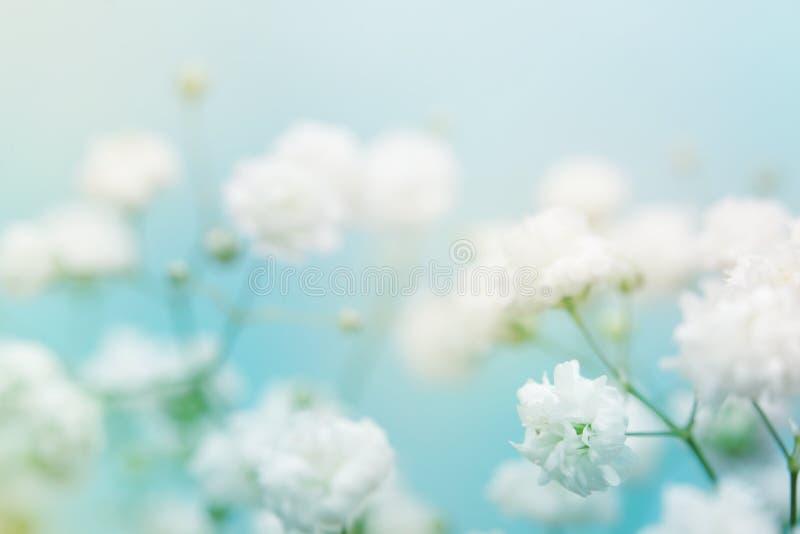 背景蓝色花白色 库存图片