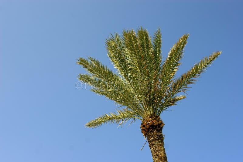 背景蓝色palmtree 库存照片