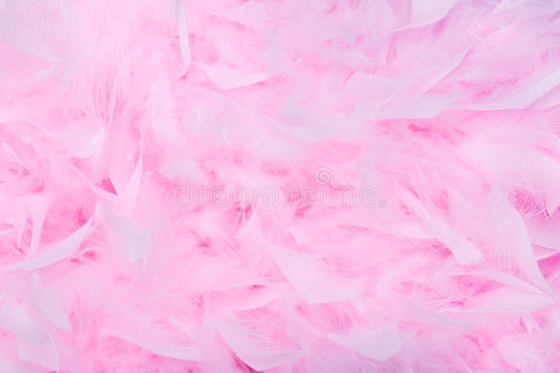 背景蟒蛇羽毛粉红色 图库摄影