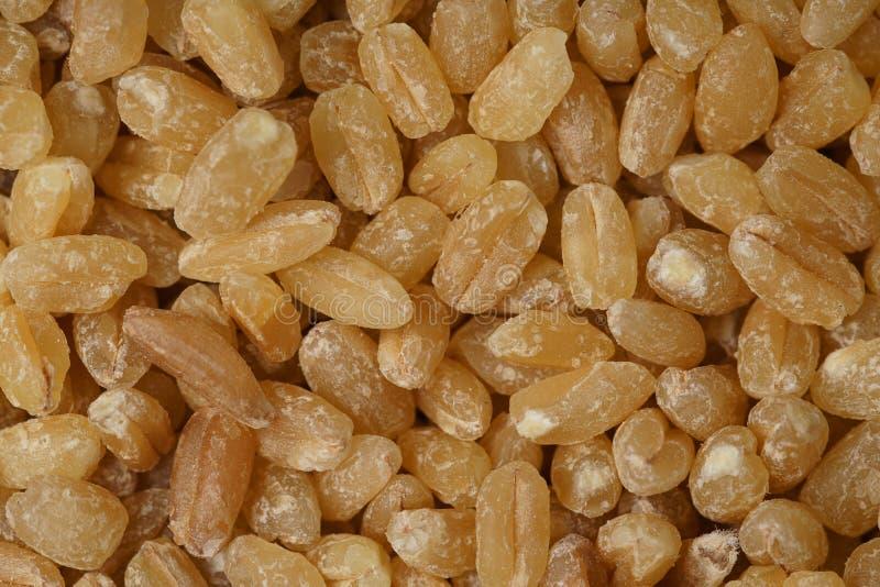 背景设计谷物纹理麦子 免版税库存图片