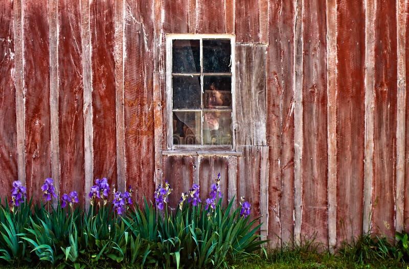 背景谷仓视窗 库存图片