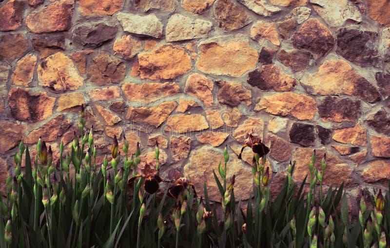 背景轻的砖石墙、纹理与草植物的和花 免版税图库摄影
