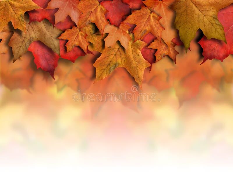 背景边界秋天留下橙红 免版税图库摄影