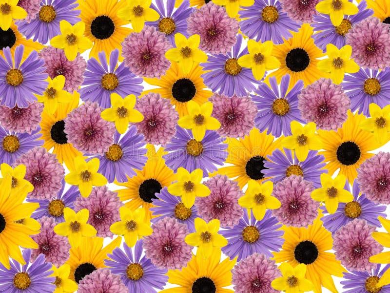 背景进展拼贴画色的花 库存照片