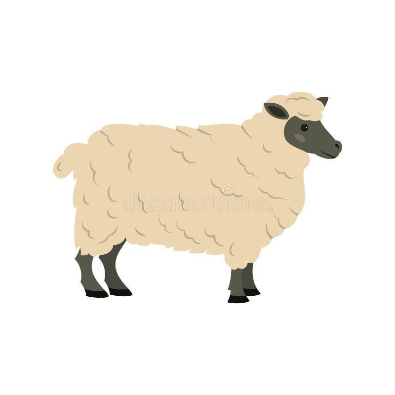 背景逗人喜爱的绵羊白色 库存例证