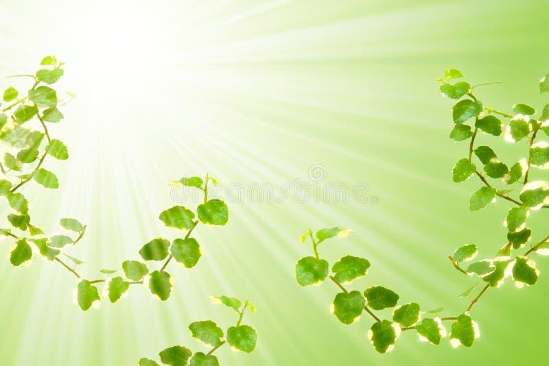 背景野生植物 向量例证
