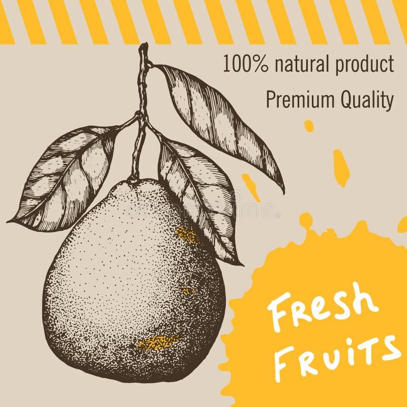 背景金子查出的lable模板葡萄酒 着墨手拉的设计用在减速火箭的背景隔绝的柑橘水果 库存例证