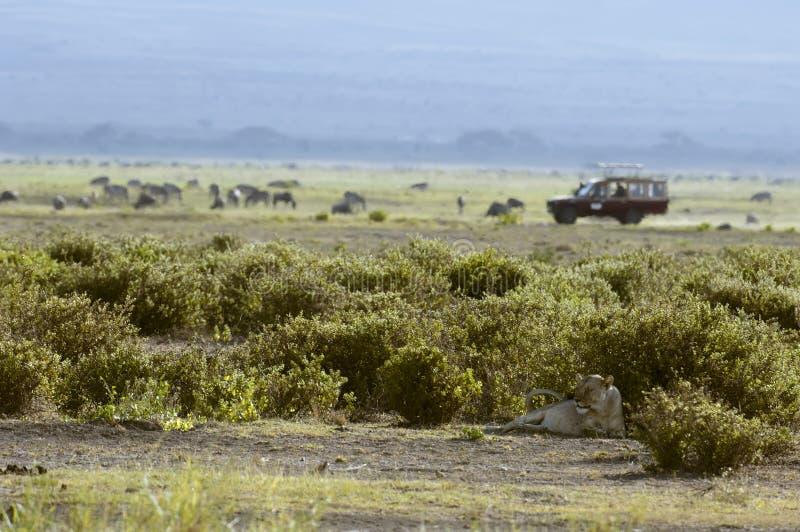 背景雌狮徒步旅行队通信工具 库存照片