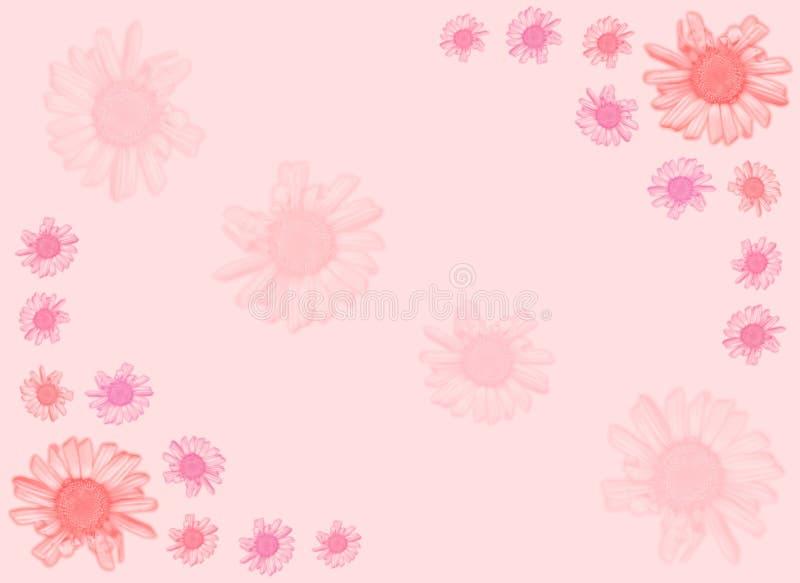 背景雏菊粉红色 向量例证