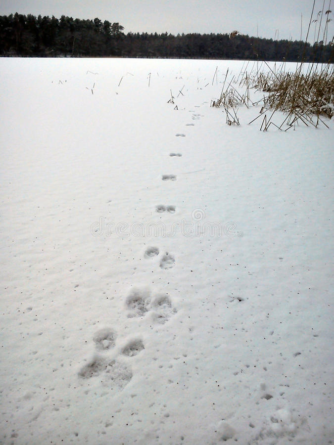 背景雪跟踪冬天 免版税图库摄影