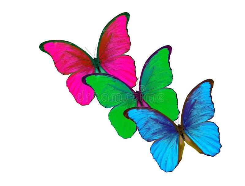 背景颜色查出rgb白色 红色,绿色和蓝色蝴蝶 向量例证