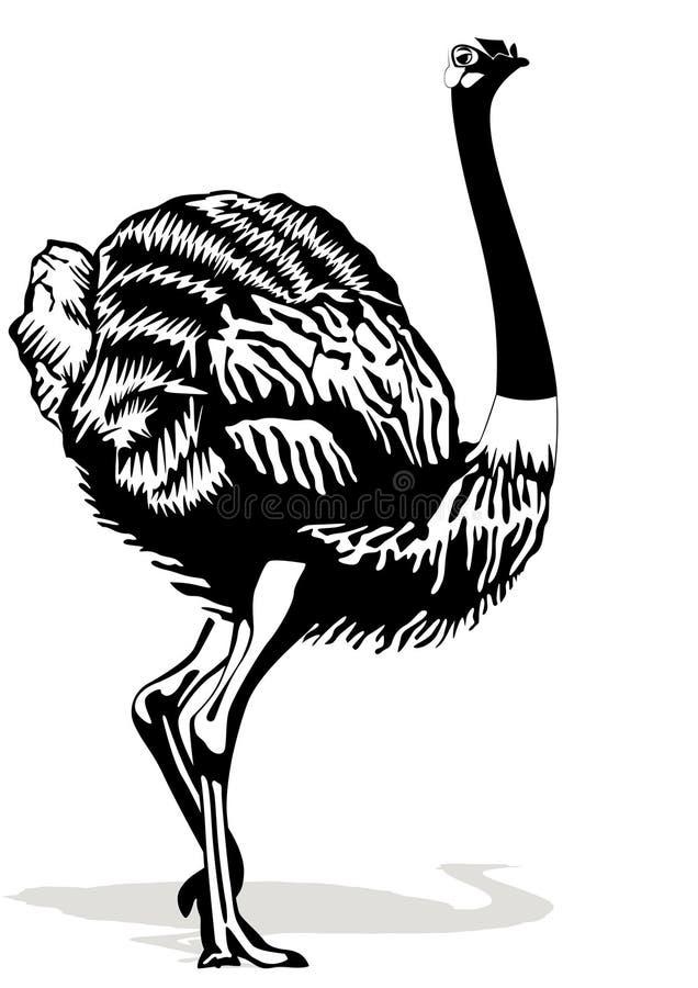 背景驼鸟白色 皇族释放例证