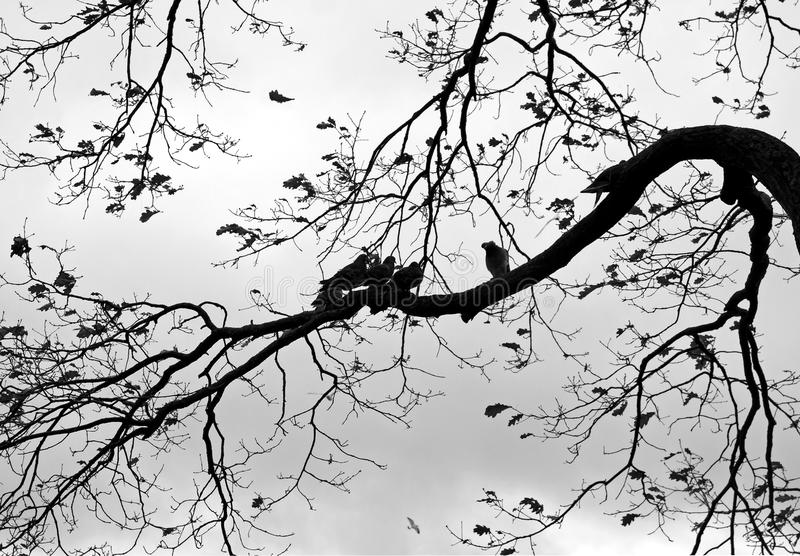 背景鸟本质结构树 图库摄影