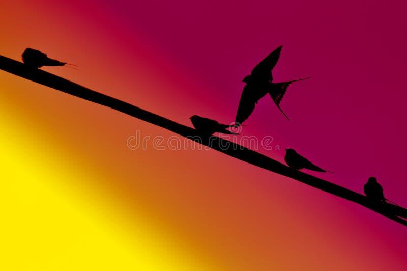 背景鸟飞行 免版税库存图片