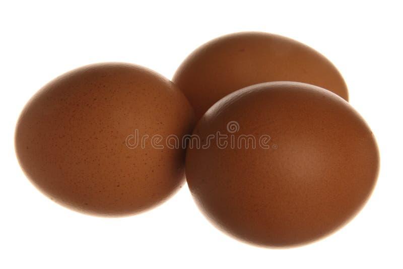背景鸡蛋查出白色 免版税图库摄影
