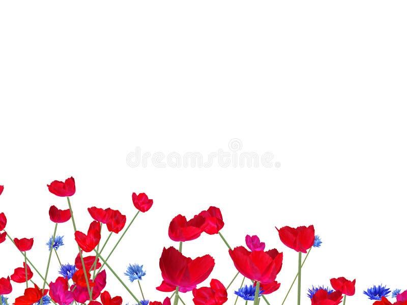 背景鸦片红色白色 免版税库存照片