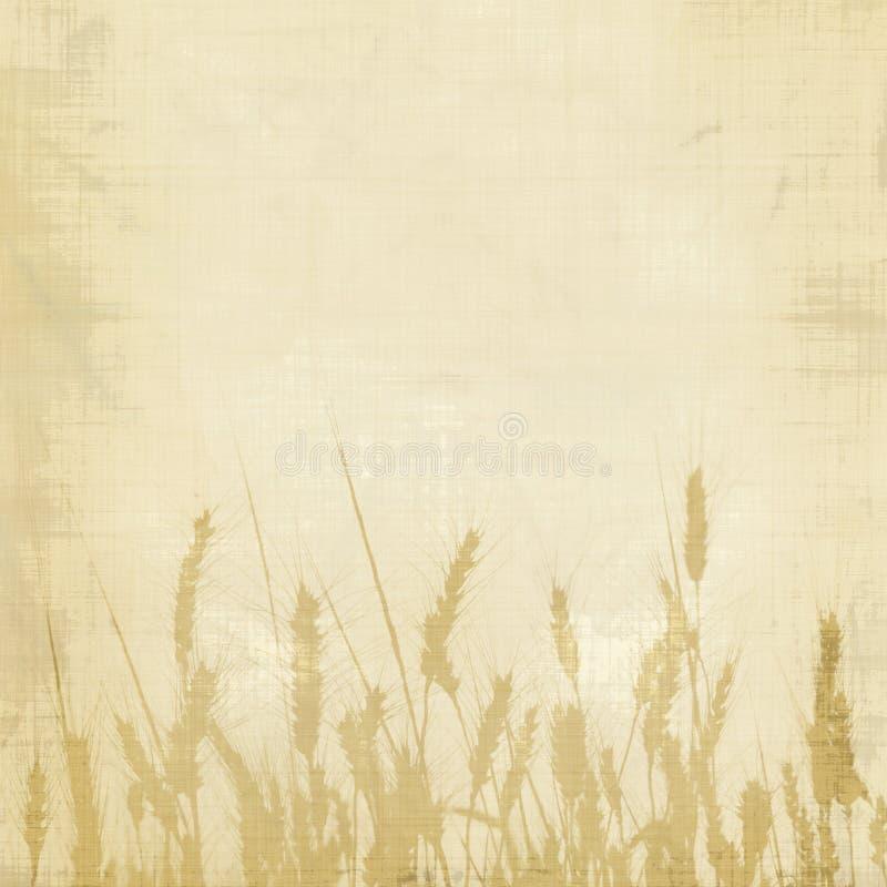 背景麦子 免版税库存图片