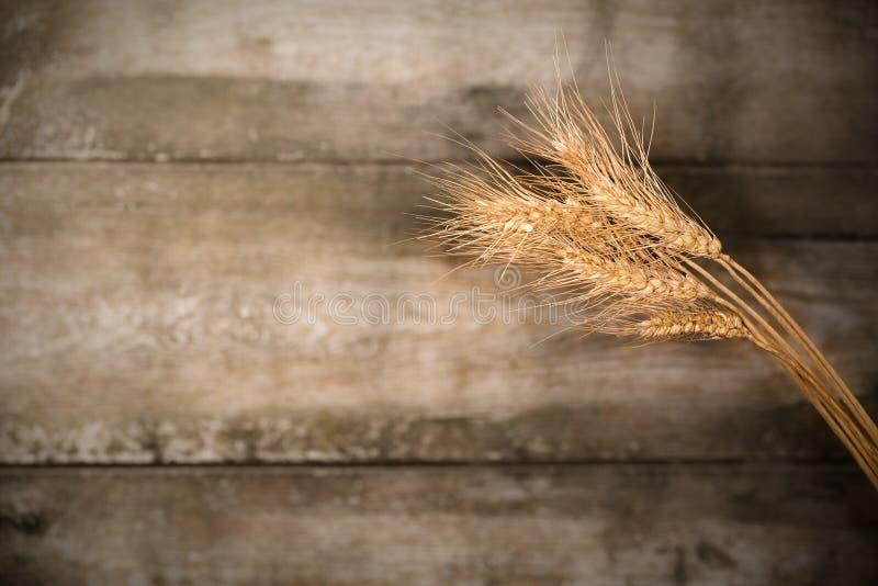 背景黑暗的耳朵麦子木头 图库摄影