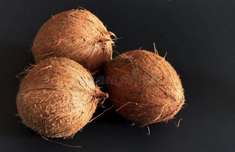 背景黑色椰子 免版税库存照片