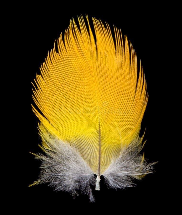 Download 背景黑色羽毛 库存照片. 图片 包括有 对象, 查出, 唯一, 空白, 颜色, 投反对票, 符号, 金刚鹦鹉 - 22353324