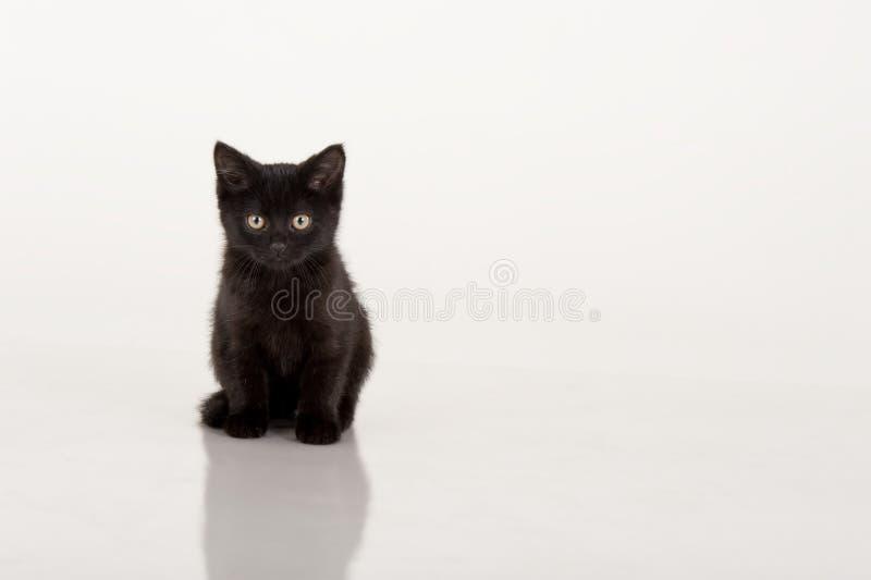 背景黑色逗人喜爱的小猫白色 库存照片