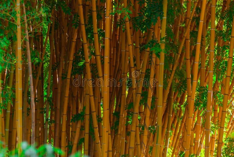 背景-竹树干 免版税图库摄影
