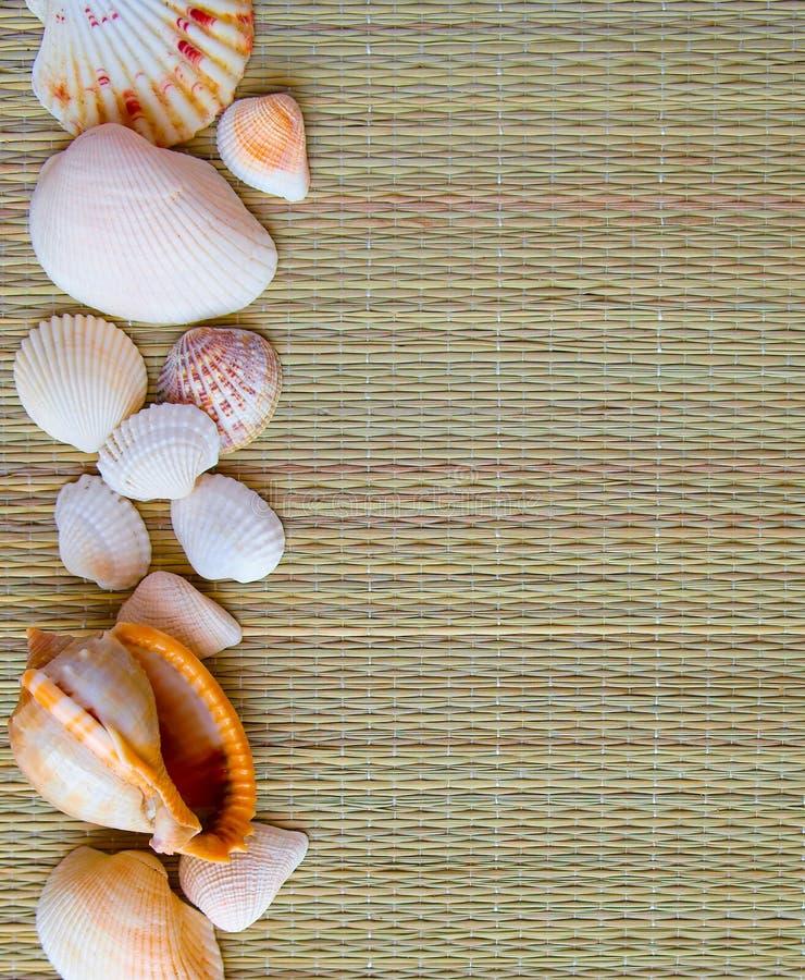 背景(纹理)从秸杆的一个米黄地毯与海海扇壳 免版税库存照片