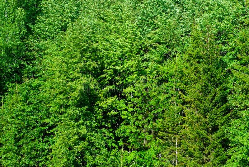 背景-自然森林植物群落墙壁 免版税图库摄影