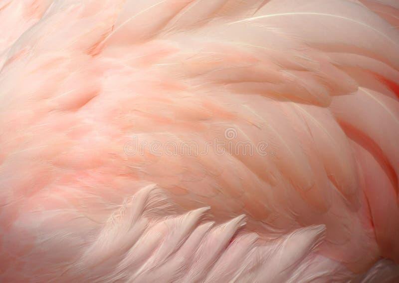 背景黑色深度用羽毛装饰域浅白色 图库摄影