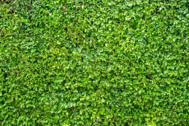 背景绿色留下墙壁 库存照片