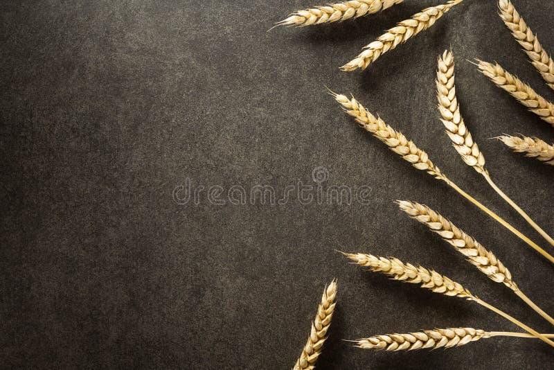 背景黑色耳朵麦子 免版税库存照片