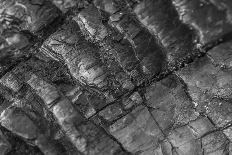 背景-被烧焦的树细节 免版税库存图片