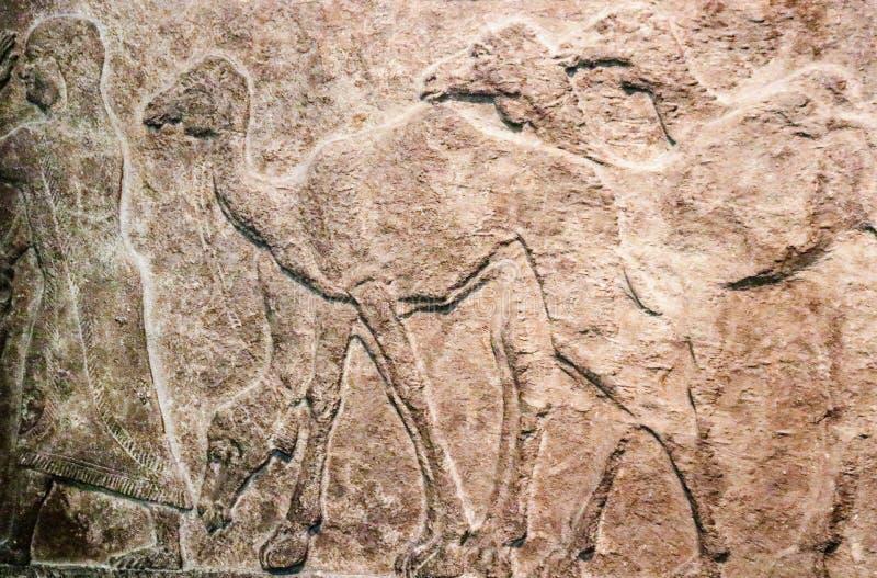 背景-雕刻在跟随一个人的多头骆驼石头的埃及浅浮雕  图库摄影