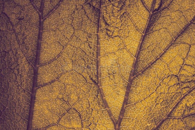 背景 黄色秋天叶子 库存照片
