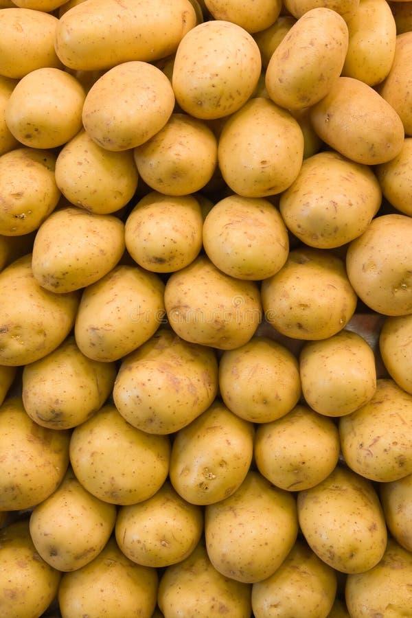 背景potatoe 免版税库存图片