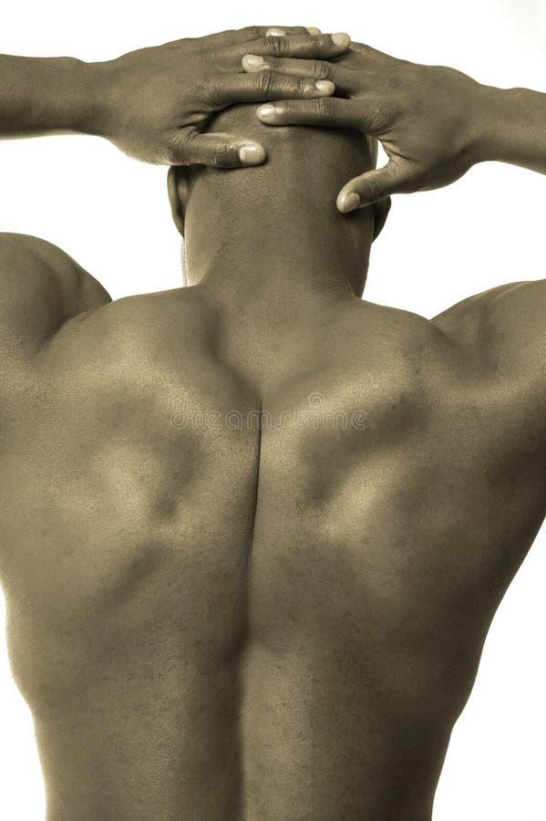 背部男性肌肉 库存照片