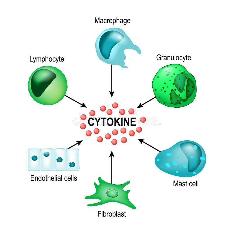 细胞因子 传染媒介概念 皇族释放例证