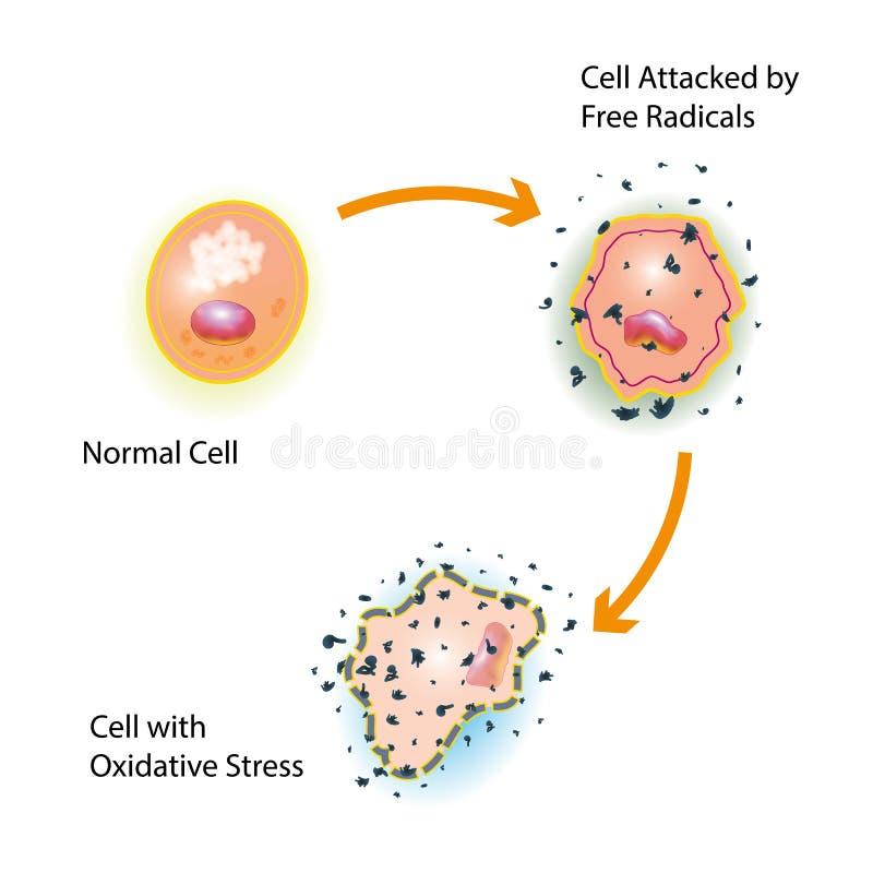 细胞氧化重音 皇族释放例证